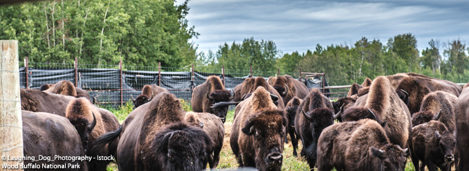 5 parcs naturels éblouissants à voir en Alberta