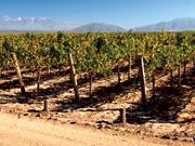 Route des viins