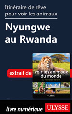 Itinéraire de rêve pour voir les animaux Nyungwe au Rwanda