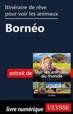 Itinéraire de rêve pour voir les animaux -  Bornéo