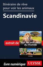 Itinéraire de rêve pour voir les animaux -  Scandinavie