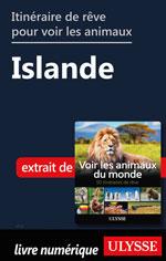 Itinéraire de rêve pour voir les animaux -  Islande
