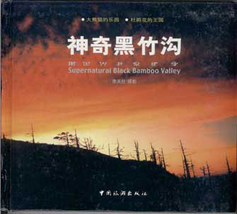 Supernatural Black Bamboo Valley (Sichuan Province)